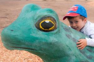 Na kempingu w ramach odstraszania kangurów mieszkała żaba olbrzymia.